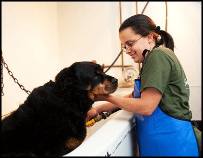 Dog Grooming Middleboro Ma